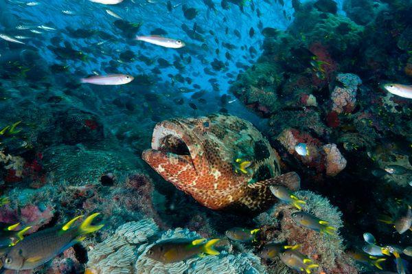 world largest marine reservior