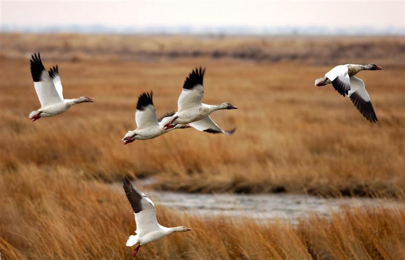 migratory birds day noman ashraf