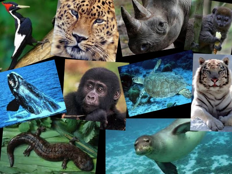 Top 10 most endangered species in the world