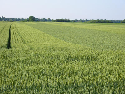 food crops and pesticide pollution