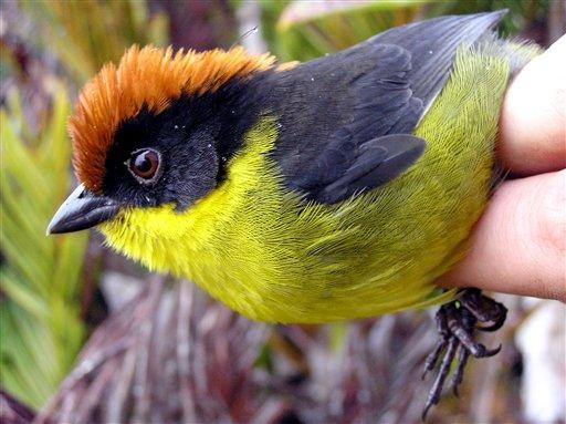 social change in birds habitate