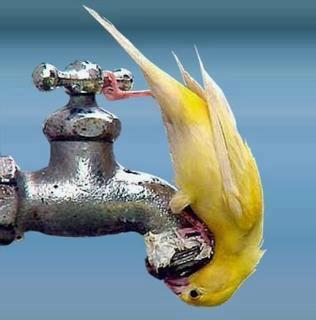 Thirsty bird in need of water!