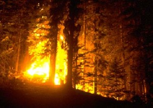 top 10 environmental disasters