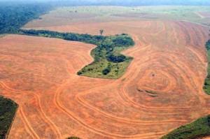 harmfull effects of deforestation