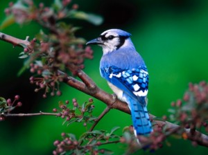 top 10 beautiful birds