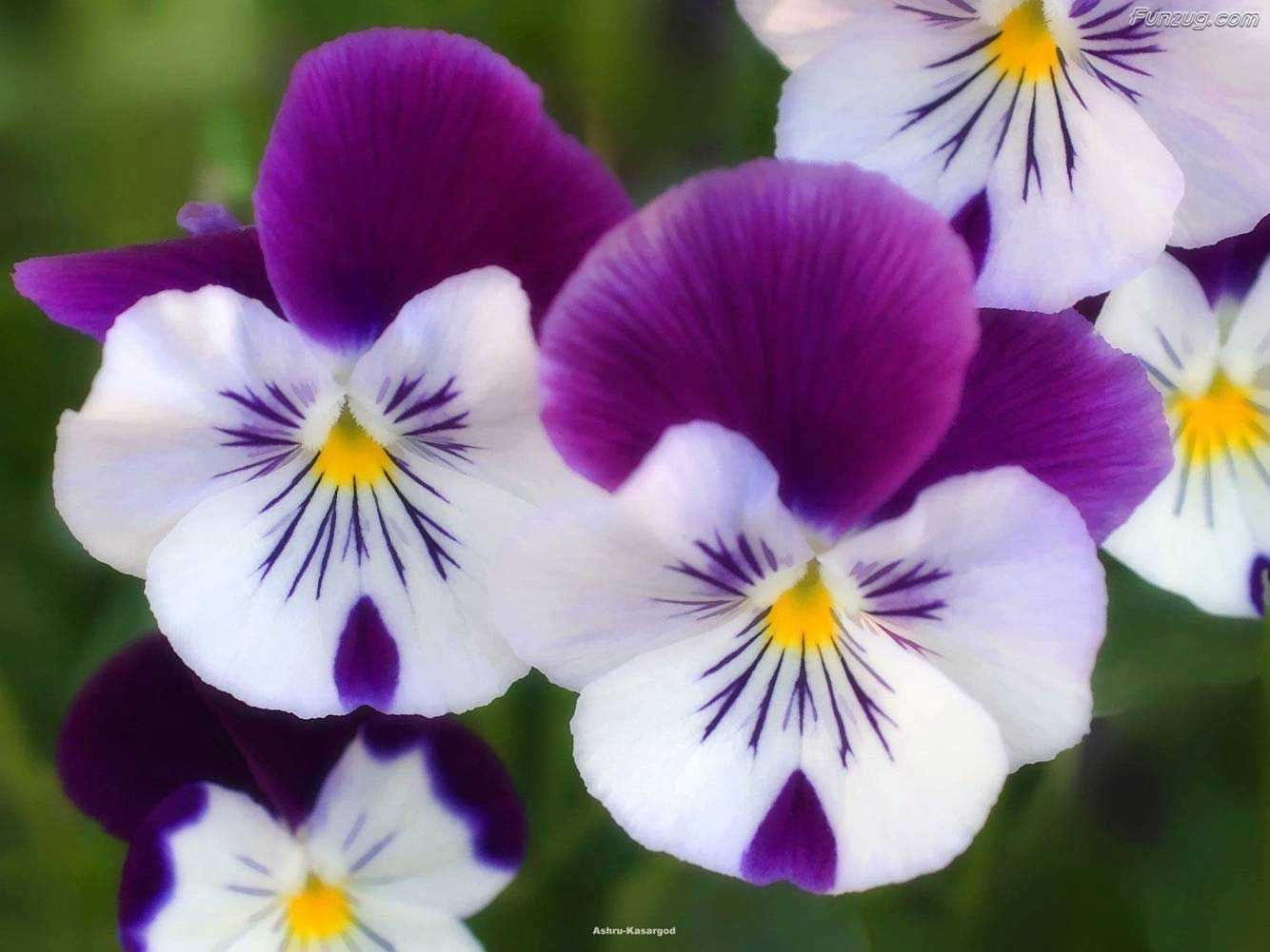 Top 10 Beautiful Flowers
