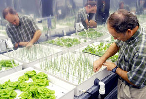 Hydroponic Gardening for Healthy Living