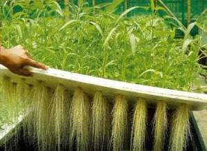 hydrophonic farming and gardening