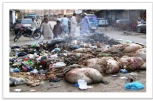 disposal of offal and environmental concerns Environmental impacts of solid waste landfilling solid waste disposal in landfills are gas environment present serious environmental concerns at both.