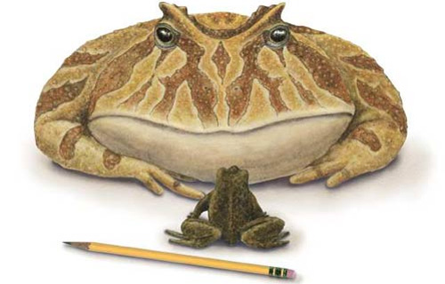 The Giant Prehistoric Devil Toad