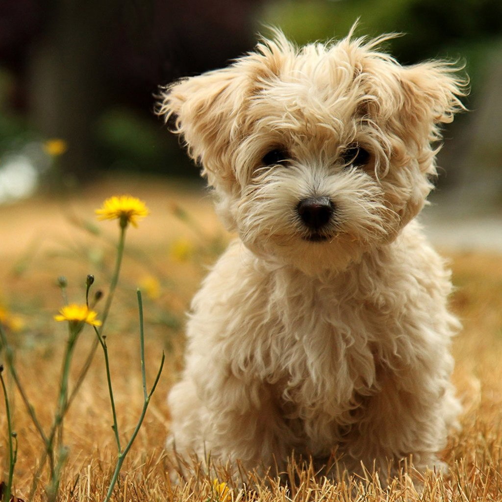 Top 10 Dog Breeds With Pictures