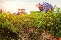 Conventional Versus Organic Farming: What's Really Better For You?