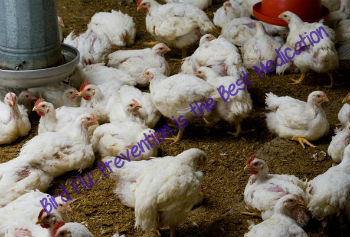 Bird Flu: Prevention is the Best Medication