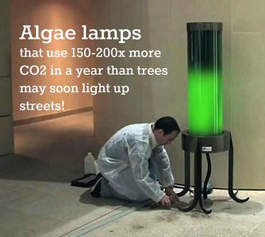 Algae street lamps