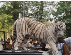 PML-N Tiger Died