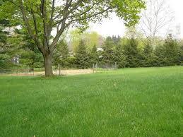 environment friendly yard