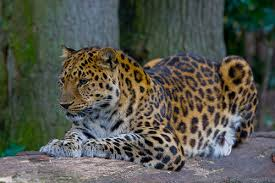 top endangered animals