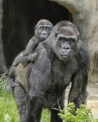 top endangered animals