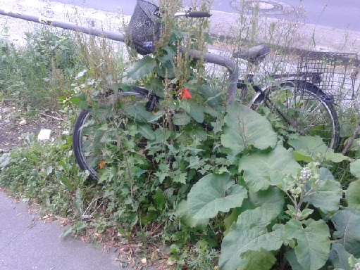 germany weed problem
