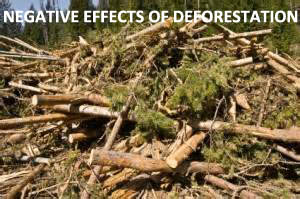 Negative Effects of Deforestation