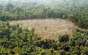 effects of deforestation in brazil
