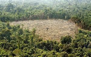 effects of deforestation in brazil