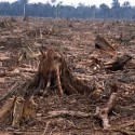 An Overview of Deforestation